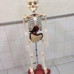 Esqueleto!